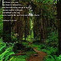 The Narrow Way by Jeff Swan