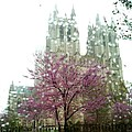 The National Cathedral  by Lois Ivancin Tavaf