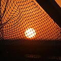 The Netted Sun by Leticia Latocki