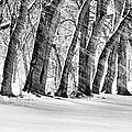The Noreaster Bw by JC Findley
