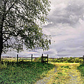 The North Pasture by John Anderson