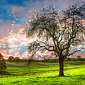 The Old Apple Tree At Dawn by Debra and Dave Vanderlaan
