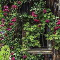 The Old Barn Window by Debra and Dave Vanderlaan