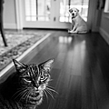 The Old Cat And The New Puppy by Diane Diederich
