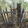 The Old Gate Could Use Some Oil. by Rodney Appleby
