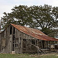 The Old Homestead by Terry Fleckney