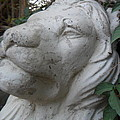 The Old Lion by Maria Quintero