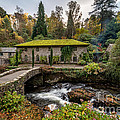 The Old Mill by Adrian Evans