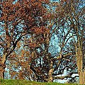 The Old Oak Trees by Joseph Yarbrough
