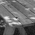 The Old Picnic Table by Jennifer E Doll