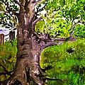 The Old Walnut by Evelina Popilian
