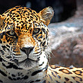 The Ole Leopard Don't Change His Spots by Lynn Sprowl