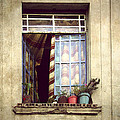 The Open Window by Julie Palencia