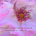 The Optimist Sees The Rose by Venetia Featherstone-Witty