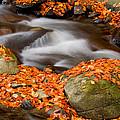The Orange Stream by Mircea Costina Photography