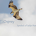 The Osprey by DigiArt Diaries by Vicky B Fuller