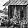 The Outhouse Bw by Carolyn Marshall