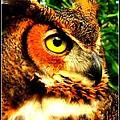 The Owl's Eye by Dora Sofia Caputo Photographic Design and Fine Art