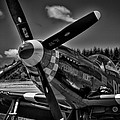 The P-51 Speedball Alice Mustang by David Patterson