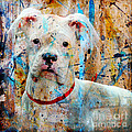 The Painter's Dog by Judy Wood