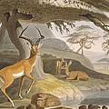 The Pallah, 1804-05 by Samuel Daniell