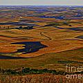 The Palouse by Christie Greiner-shelton