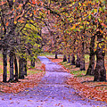 The Park In Autumn by Dominic Piperata