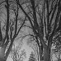 The Park In Black And White by Gloria Pasko