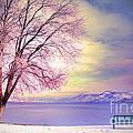 The Pastel Dreams Of Winter by Tara Turner