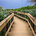 The Path by Adrian Arceci