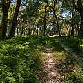 The Path by DeWayne Beard