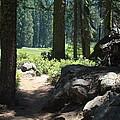 The Path Less Traveled by Karen j Kobrin Cohen