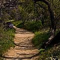 The Path by Patrick Moore