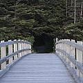 The Path The Lies Ahead by Paul Shoaf