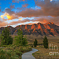 The Path To Beauty by Robert Bales