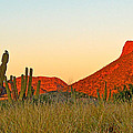 The Peak And Cardon Cacti In The Sunset In San Carlos-sonora by Ruth Hager