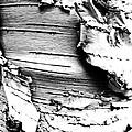 The Peeling Birch by Steve Taylor