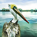 The Pelican Perspective  by Priya Ghose