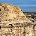 The Petrified Log by Vivian Christopher