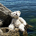The Philosopher - Teddy Bear Art By William Patrick And Sharon Cummings by Sharon Cummings