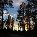 The Pines At Sunset by Michelle Cassella