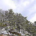 The Pines by Todd Hostetter
