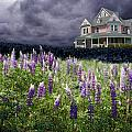 The Pink House In The Lupine by Wayne King