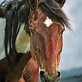 The Pinto Horse Portrait by Angel Ciesniarska