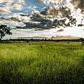 The Plains Of Africa by Andrew Matwijec