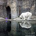 The Polar Bear And The Purple Chair by Gwyn Newcombe