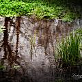 The Pond by Monica Havelka