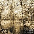 The Pond by Yanni Theodorou