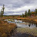 The Ponds Near Raquette Lake by David Patterson