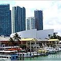 The Port Of Miami At Bayside by Dora Sofia Caputo Photographic Design and Fine Art